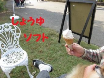 ひたち海浜公園2015 045