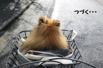 駒沢ドックラン 002