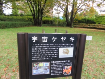駒沢ドックラン 003