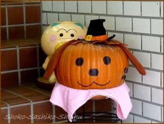 20151031 店先  8  かぼちゃ