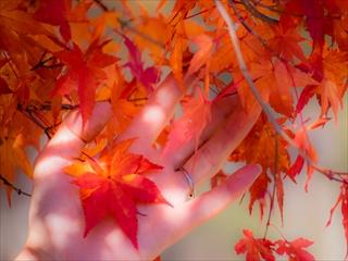 2015-10-19 日光紅葉08 (1 - 1DSC_0053)_R