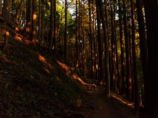 2015-10-26 丹沢12 (1 - 1DSC_0013)_R