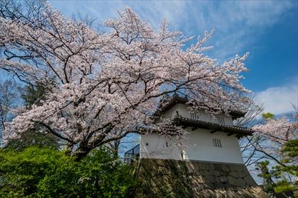 2016-4-6 お花見02 (1 - 1DSC_0005)_R