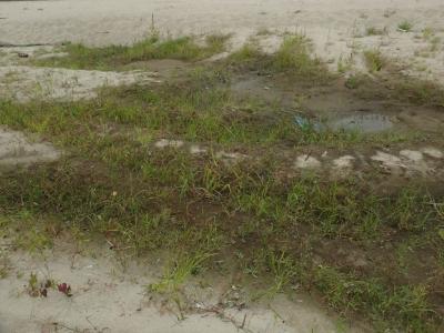 河川敷の小湿地