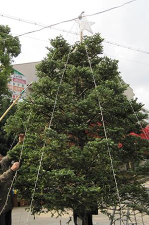 2009年もみの木