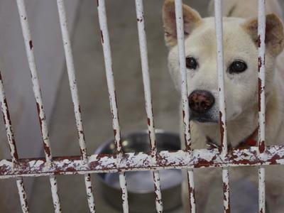 宮崎犬管理所15-12-02-004