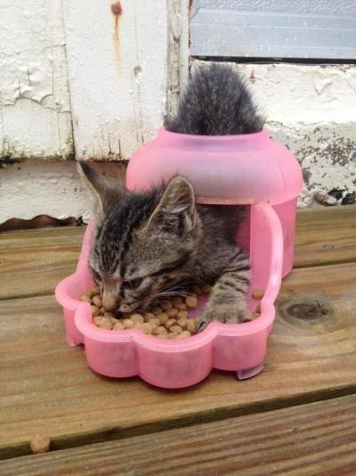omoi_cat04.jpg