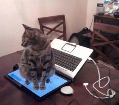 omoi_cat08.jpg