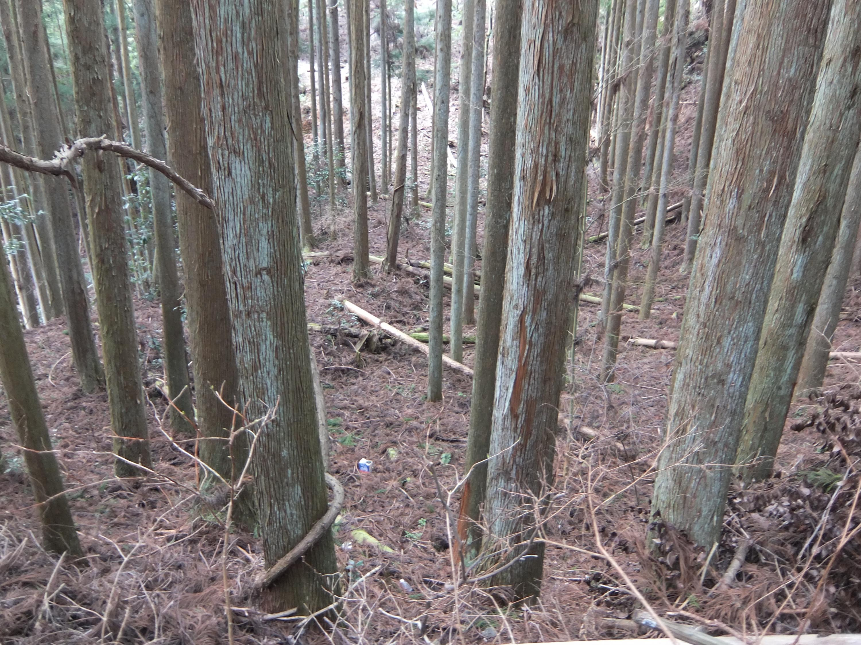 高野山森林鉄道12
