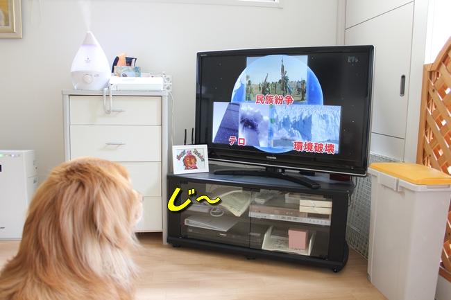 tv鑑賞 010