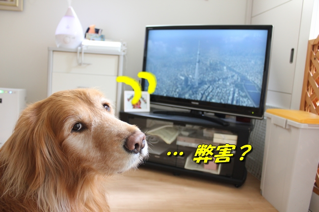 tv鑑賞 013