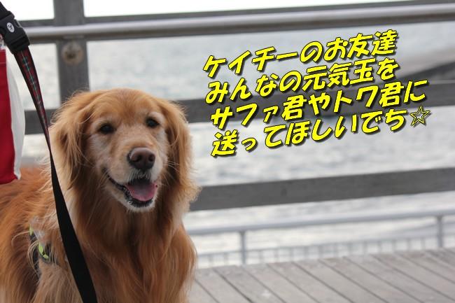 大蔵海岸 081