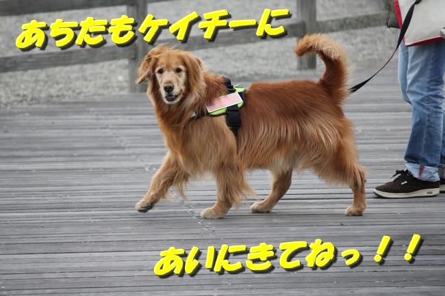 大蔵海岸 138