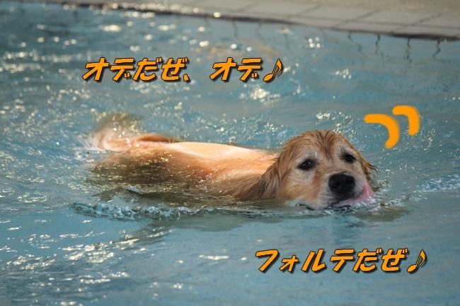 ぶん太君とフォルテ君と泳いだ日 337