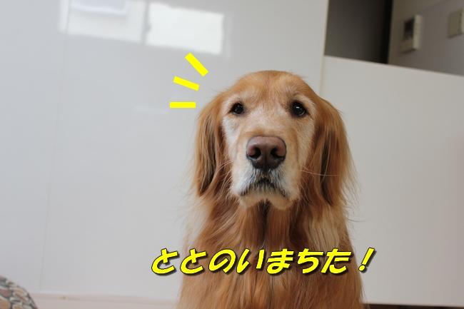 tv鑑賞 019
