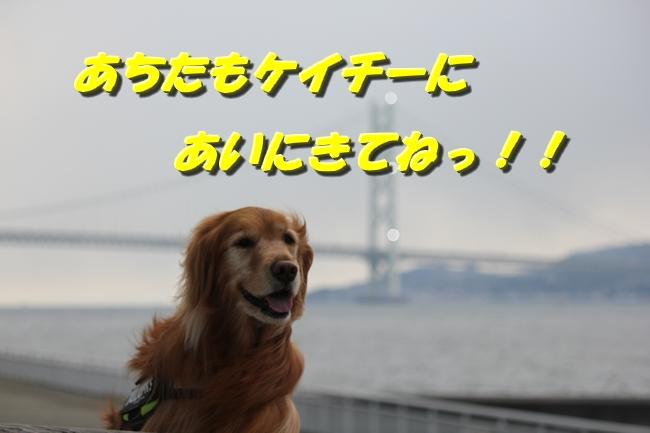 大蔵海岸 304