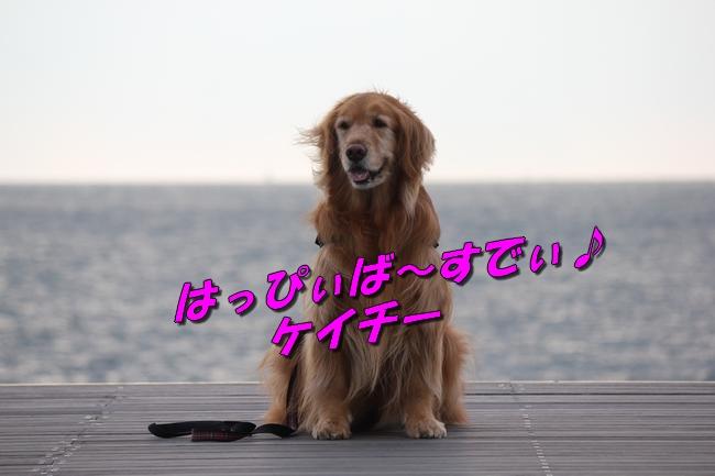 大蔵海岸 125