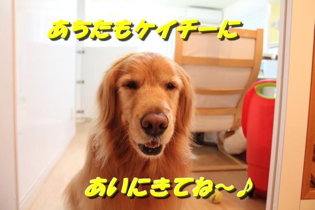 テーブル新聞 013
