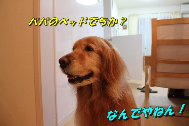テーブル新聞 014