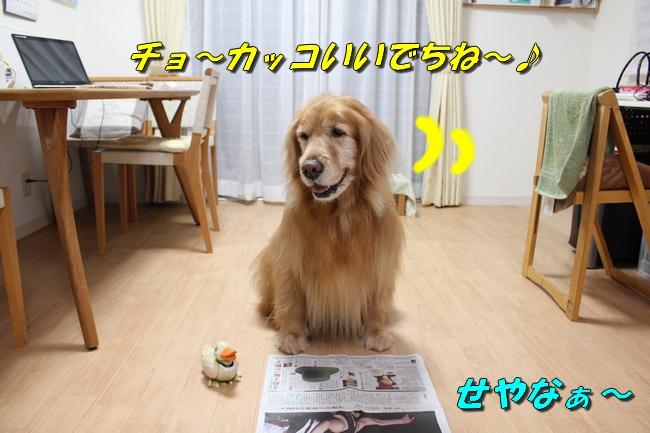 テーブル新聞 026