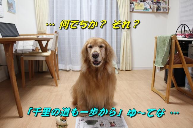 テーブル新聞 027