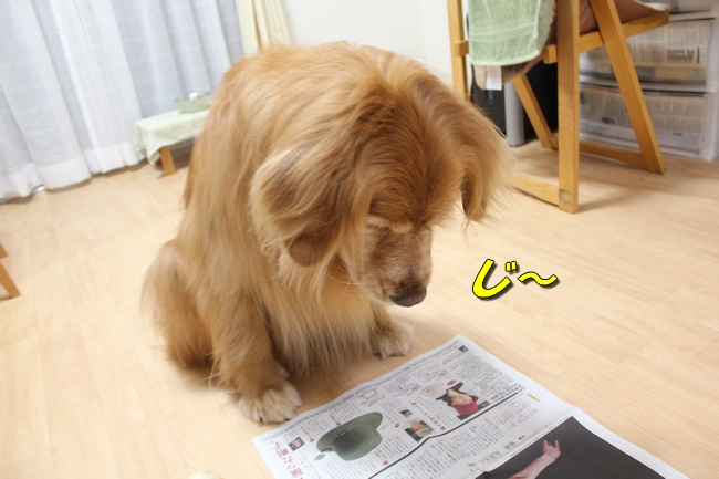 テーブル新聞 028