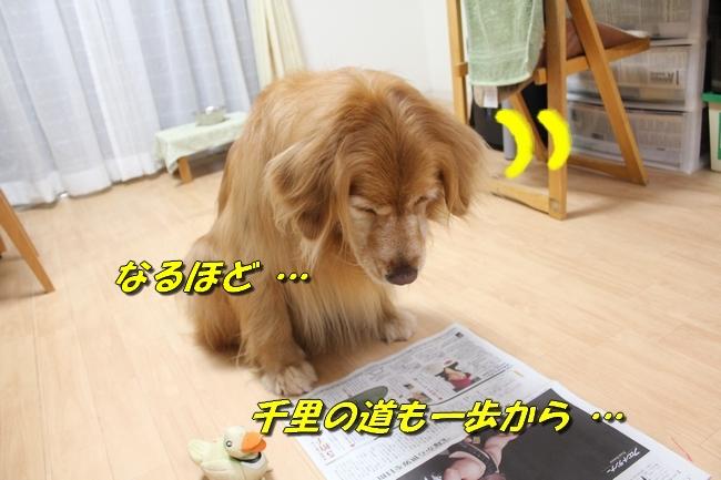 テーブル新聞 029
