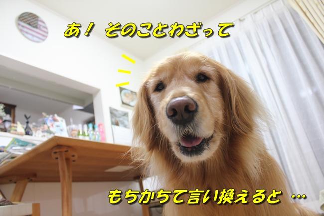 テーブル新聞 033