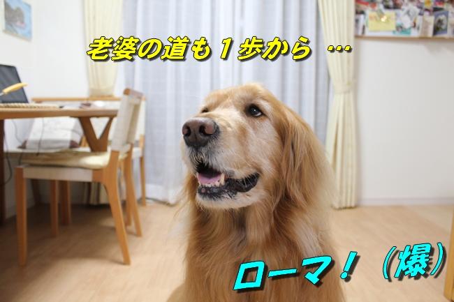 テーブル新聞 036