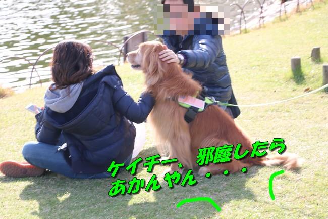 明石城公園桜2016 187