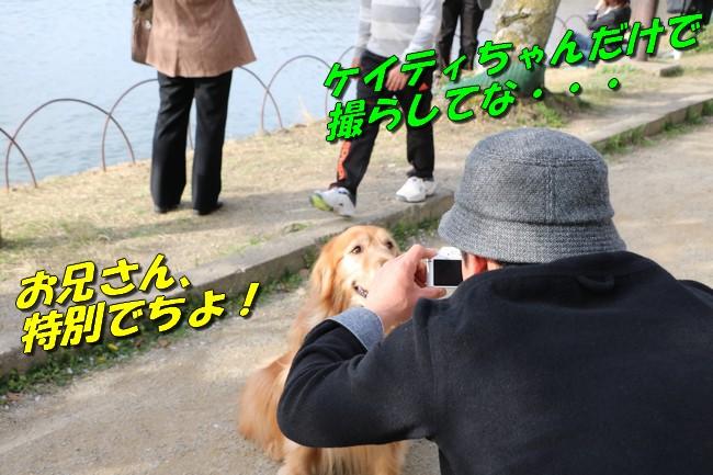 明石城公園桜2016 274