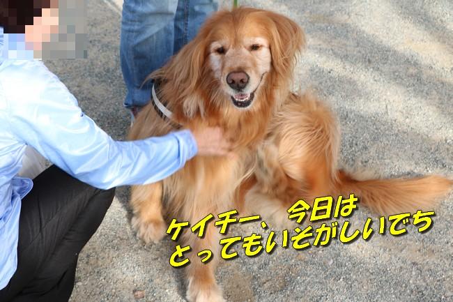 明石城公園桜2016 292