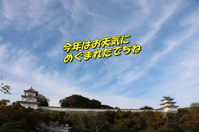 明石城公園桜2016 404