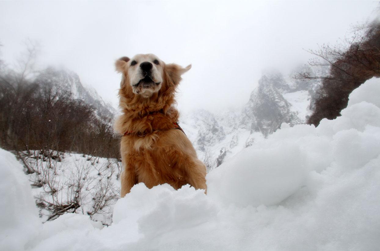 谷川岳雪中訓練 (52)