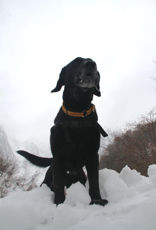 谷川岳雪中訓練 (53)