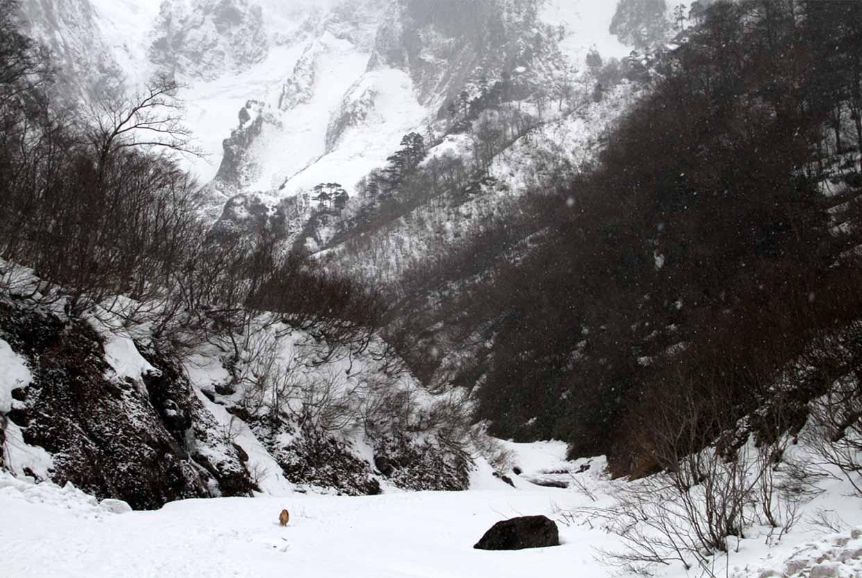 谷川岳雪中訓練 (58)