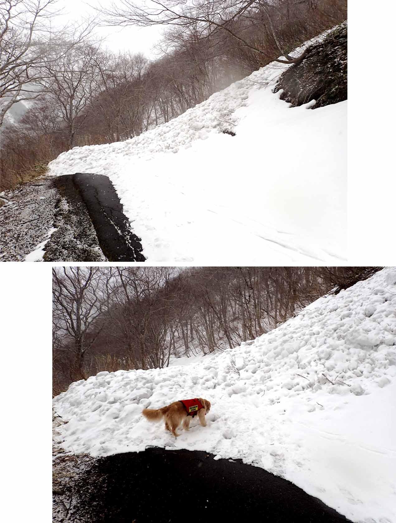 谷川岳雪中訓練 (75)