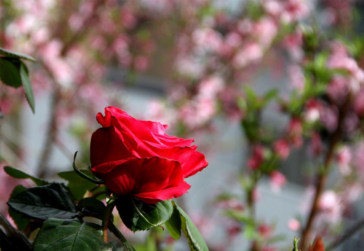 4月9日の一番花(1)