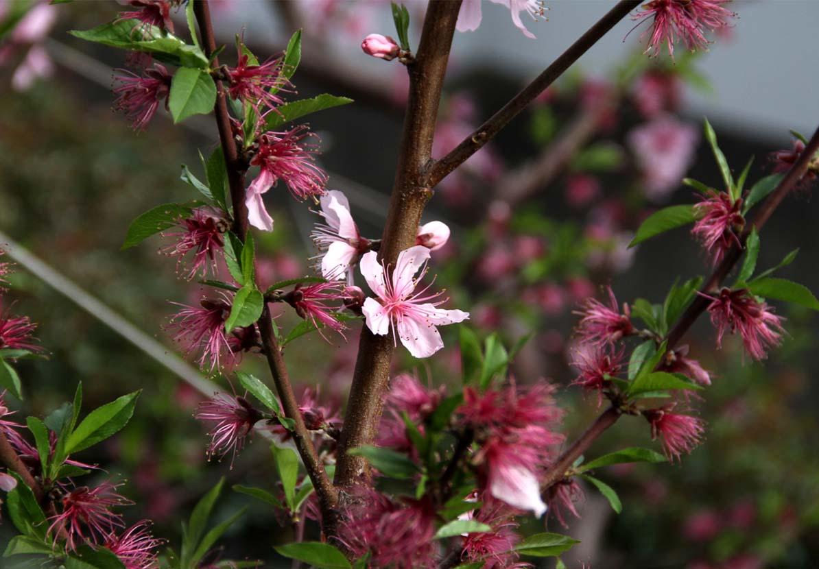 4月9日の一番花(3)