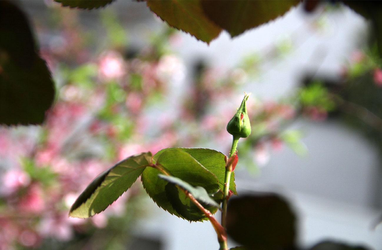 4月9日の一番花(5)