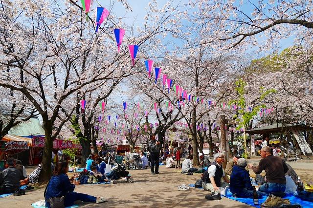 2016-03-31 川越の桜 060