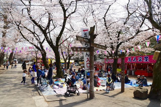 2016-03-31 川越の桜 042