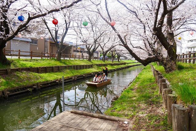 2016-03-31 川越の桜 103