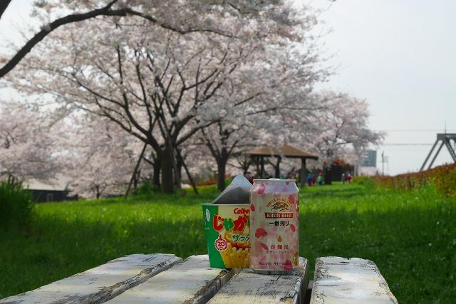 2016-04-06 川越 桜 179