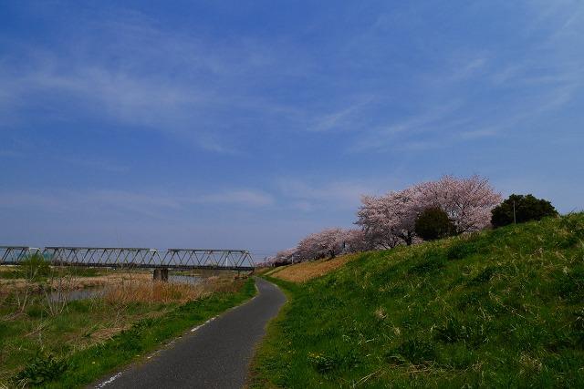 2016-04-06 川越 桜 140