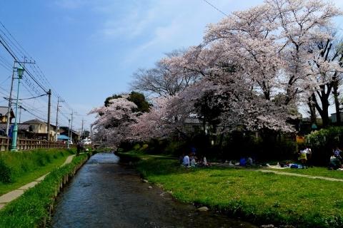 2016-04-06 川越 桜 270