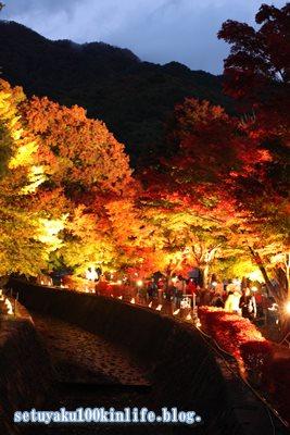2015-11-5初心者でも上手く撮れる!富士河口湖紅葉祭り夜景写真のコツ教えます。