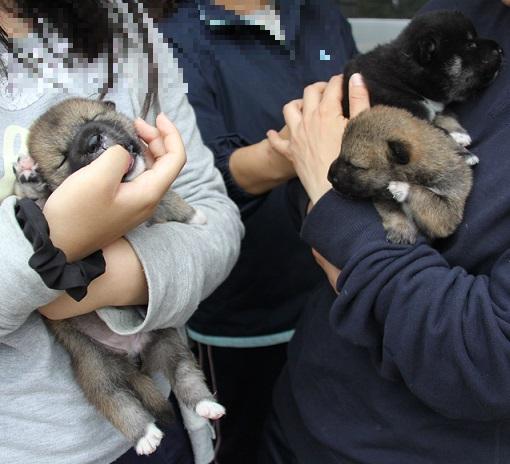 2015-11-14全国広島子犬1