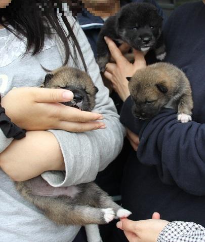 2015-11-14全国広島子犬2