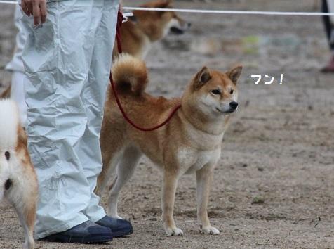 2015-11-14全国広島こばこ21